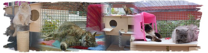 Cantented Cats Cattery - South West Wales